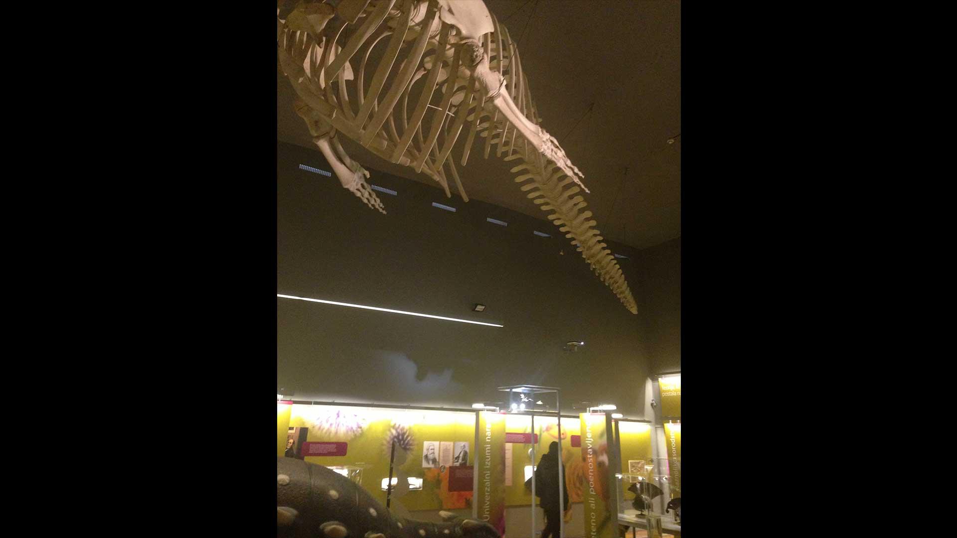 Evolution Museum Design
